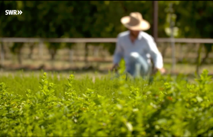SWR- Essgeschichten- Querbeet auch das Kräuterjahr screenshot aus dem Film