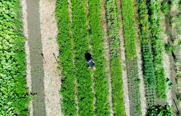 Drohnenaufnahme von Annika Schreins Landbau in Moerfelden-Walldorf